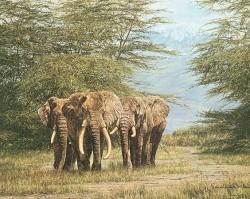 Combes Elephants B, 6/18/03, 11:49 AM,  8C, 5017x3686 (547+2363), 100%, Gustafson 4,  1/25 s, R84.2, G64.8, B84.9