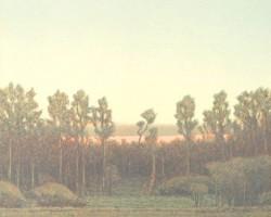 Cottonwoods at Sundown