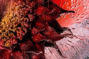 Devilish-Red-400x267