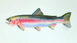 Glorified trout-web