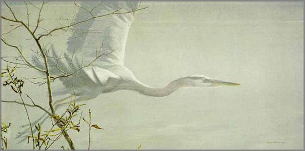 Great Blue Heron Robert Bateman Artwork Gallery 601