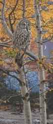 frederick owl 2, 5/6/15, 11:15 AM,  8C, 3712x7529 (1650+2546), 138%, bye 4-4-15,   1/8 s, R68.4, G55.7, B80.1