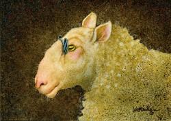 SheepShades-web