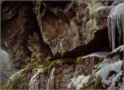 At the Cliff Bobcat