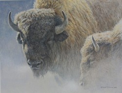 bateman-wood bison