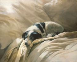 dog, 3/7/12, 10:59 AM,  8C, 6580x4965 (364+2969), 125%, Custom,  1/30 s, R63.2, G50.3, B73.7