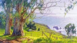 eucalyptus coast