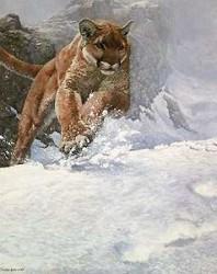 Cougar Run-web