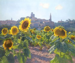 sunflowers of castiglion fiorentino