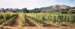 vineyard before the harvest