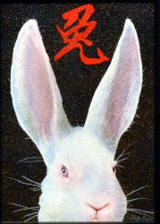 year of rabbit-web